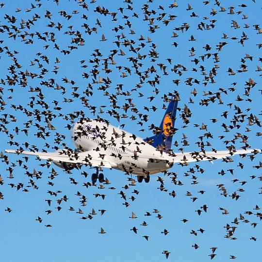 Airport bird control
